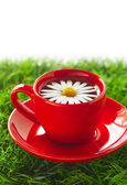 Red cup of tea with chamomile — Stock Photo