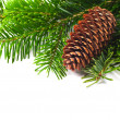 Spruce branches with cone - Stock Photo
