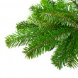Stock Photo: Spruce branches