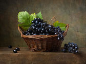 Still life with black grapes — Stock Photo