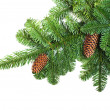 Fir branches with cones — Stock Photo #40589253