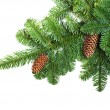 Fir branches with cones — Stock Photo