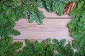 Fir branches with cone on wooden boards — Стоковое фото