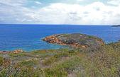 Giglio ö kusten — Stockfoto