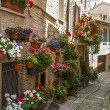Stock Photo: Flowery alley in Spello