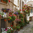 Flowery alley in Spello — Stock Photo #26269811