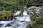 Gorge of Vintgar — Foto de Stock