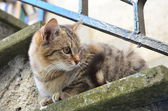 Cat on stairs — Stock Photo