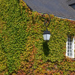 House wall full of ivy — Stock Photo #38293213