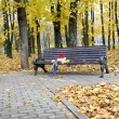 Santa's cap and an umbrella on a bench. — Stock Photo
