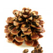 Stock Photo: Seeds and disclosed pinecone.