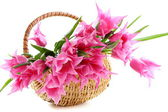 Pink tulips in wicker basket. — Stock Photo