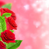 Beautiful red roses. — Stock Photo