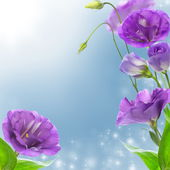 Eustoma blue flowers. — Stock Photo