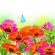 Blue butterfly on colorful flowers. — Stock Photo