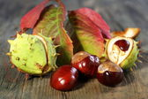 Horse Chestnut with autumn leaves. — Stock Photo