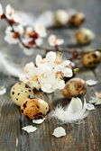 Flowering branch and quail egg. — Stock Photo