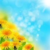 Flowering dandelions. — Stock Photo