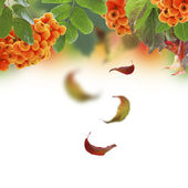Autumn collage with falling leaves. — Stock Photo