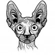 Vector illustration of cat head — Stok Vektör