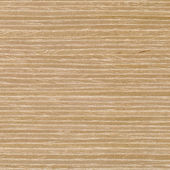Beech wood texture — Stock Photo