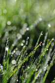 Abstract background morning dew — Photo