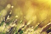 утренняя роса — Стоковое фото