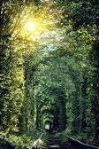 Tunnel der Liebe in der ukraine — Stockfoto