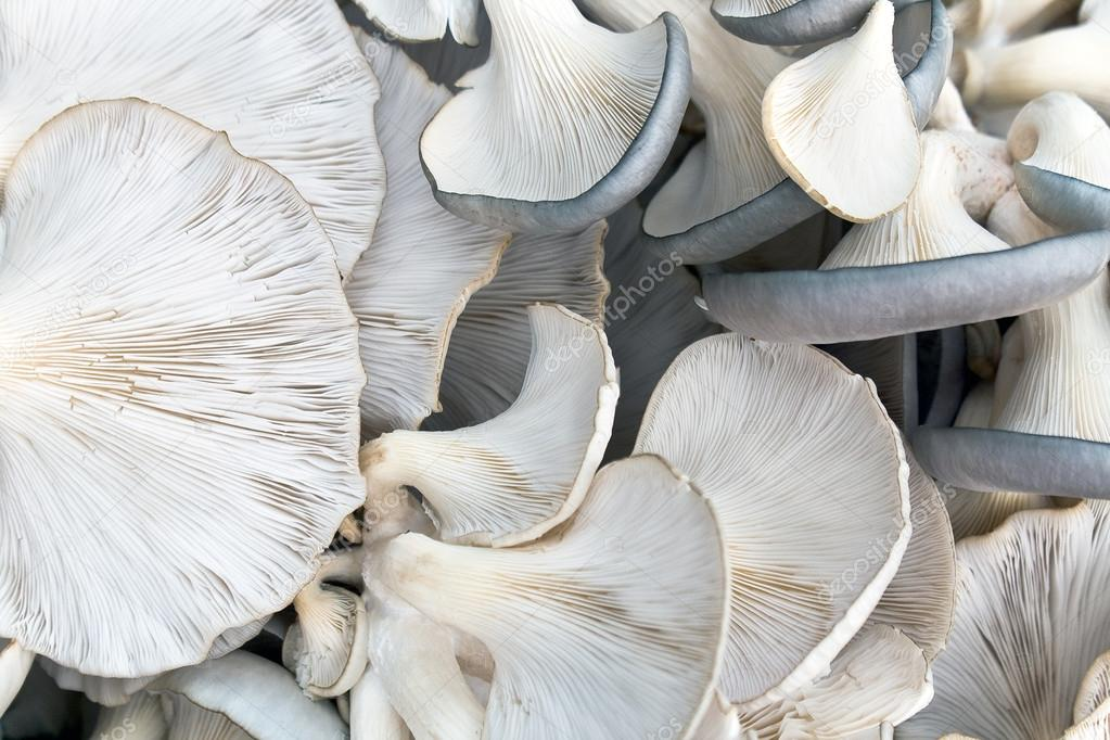 Oyster mushrooms as background — Stock Photo #12199495