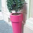 Decorative tree in a big pot — Stock Photo