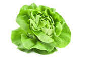 Fresh lettuce — Foto Stock