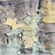 Royalty-Free Stock Photo: Tree bark texture background