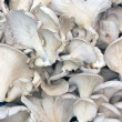 Oyster mushrooms as background — Stock Photo
