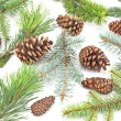 Pine cones and needles on white background — Stock Photo