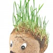 Stock Photo: Hedgehog with germinating wheat grass instead of spines on w