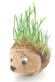 Hedgehog with germinating wheat grass instead of the spines on w — Stock Photo