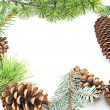 Stock Photo: Pine cones and needles on white background
