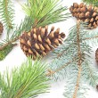 Pine cones and needles on white background — ストック写真