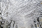 Winter trees on snow — Stock Photo
