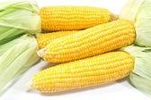 Corn on white  — Stock Photo