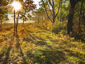 Morning in autumn forest — Stock Photo