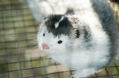 Mink in the cage — Stock Photo