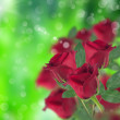 Red roses with green — Stock Photo