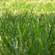 Grass background with water drops — Stock Video #12582561