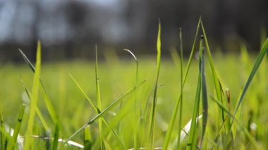 Grass background — Stock Video #12582475