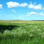 Field of green fresh grass under blue sky — Stock Photo #13633268