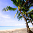 Ropical beach with palm — Stock Photo