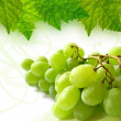 Grapes brunch — Stock Photo