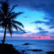 Silhouetted palm trees at a tropical beach sunset — ストック写真
