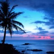 Silhouetted palm trees at a tropical beach sunset — Stock fotografie